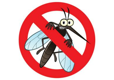 Top 6 cây cảnh trồng trong nhà giúp đuổi muỗi, côn trùng hiệu quả nhất