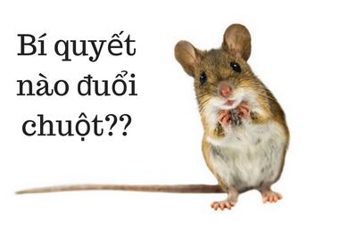 Bí quyết đuổi chuột đơn giản đến không ngờ