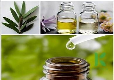 Giải đáp băn khoăn dầu tràm và tinh dầu tràm có khác nhau không?