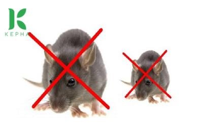 Mua tinh dầu bạc hà đuổi chuột khiến chuột phải lùi xa