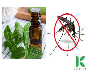 Cách làm tinh dầu bạc hà đuổi muỗi quanh nhà bạn