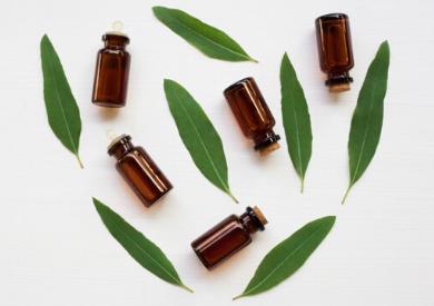 Thành phần của tinh dầu khuynh diệp là gì?