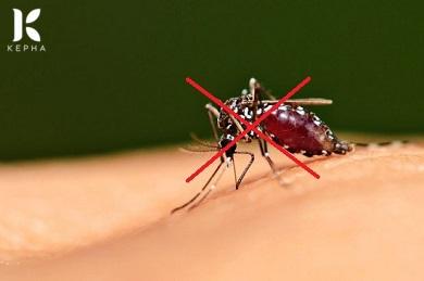 Tinh dầu quế đuổi muỗi được không và cách dùng