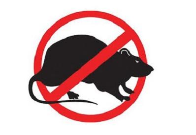 Chuột sợ mùi gì nhất? Tổng hợp những cách đuổi chuột hiệu quả