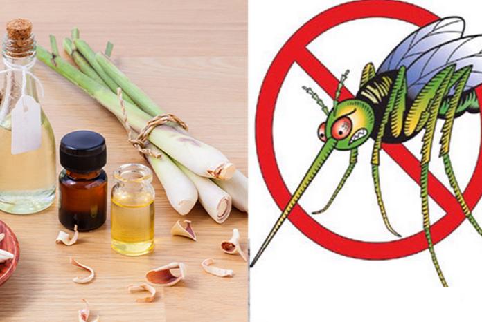 tinh dầu sả chanh đuổi muỗi