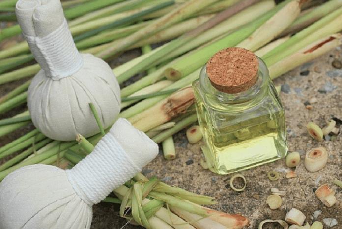 tinh dầu sả chanh nguyên chất giá bao nhiêu