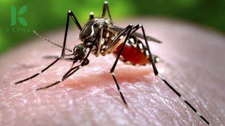 tinh dầu tràm có đuổi muỗi không