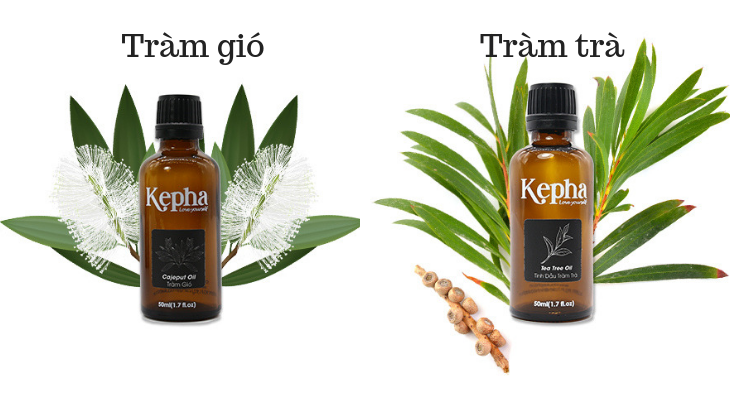 Tinh dầu tràm gió và tràm trà khác gì nhau