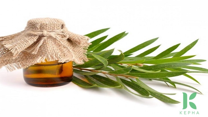 tinh dầu tràm trà có tác dụng gì